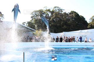 イルカの写真・画像素材[380590]