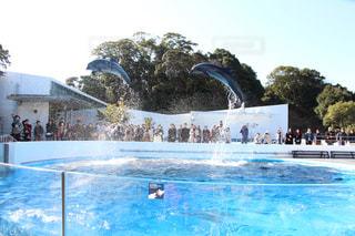 イルカの写真・画像素材[380591]
