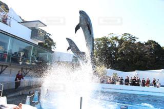 イルカの写真・画像素材[380592]