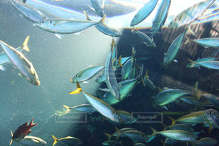 魚の写真・画像素材[380595]