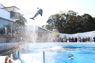 イルカの写真・画像素材[380602]