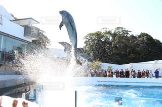 イルカの写真・画像素材[380603]