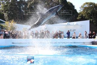 イルカの写真・画像素材[380605]