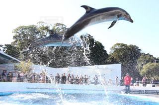 イルカ,水しぶき,可愛い,イルカショー,長崎,海きらら,間近