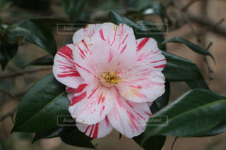花の写真・画像素材[380609]