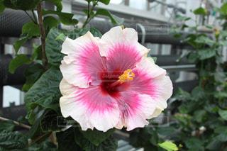 花の写真・画像素材[380612]