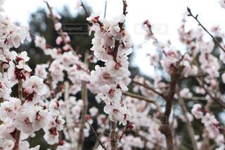 春の写真・画像素材[380621]
