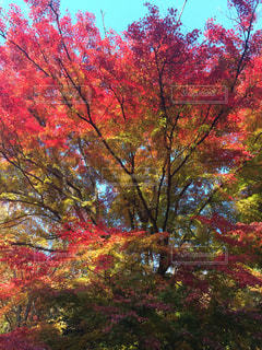 自然の写真・画像素材[257864]