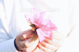 花の写真・画像素材[428047]