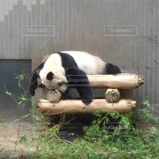 動物の写真・画像素材[254539]