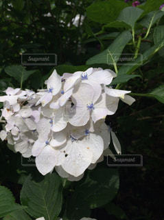 花の写真・画像素材[255623]