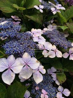 花の写真・画像素材[255626]