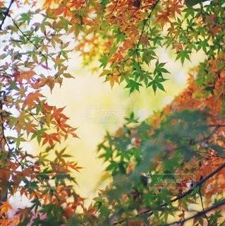 風景の写真・画像素材[6043]