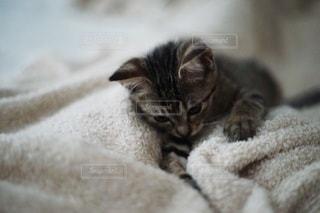 猫の写真・画像素材[6019]