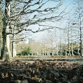風景の写真・画像素材[6005]