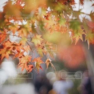 自然の写真・画像素材[6003]