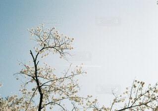 風景の写真・画像素材[5984]