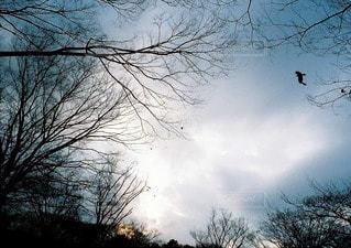 風景の写真・画像素材[5979]