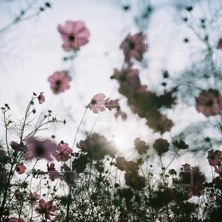 自然の写真・画像素材[5966]