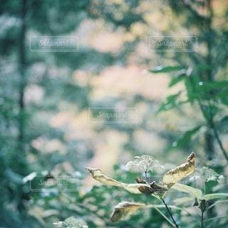 自然の写真・画像素材[5954]