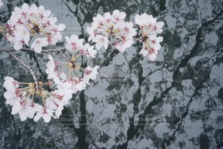 春 - No.10789