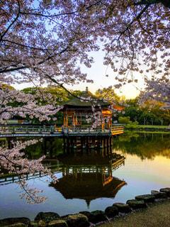 奈良公園 春の浮見堂の写真・画像素材[432193]