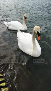 野生動物の写真・画像素材[255205]
