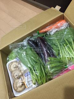 野菜の写真・画像素材[256143]