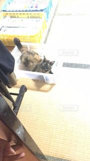 猫の写真・画像素材[696147]