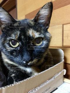箱の中に入る猫の写真・画像素材[1224995]
