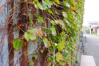 風景,秋,冬,乗り物,自転車,葉,壁,サイクリング