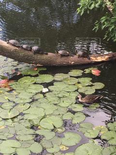 池の写真・画像素材[255630]