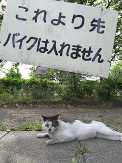 猫の写真・画像素材[256186]
