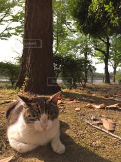 猫の写真・画像素材[256381]