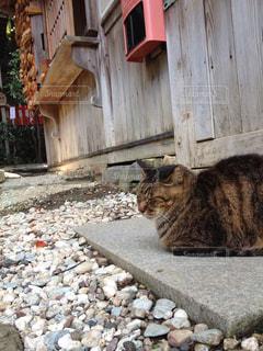 猫の写真・画像素材[260958]