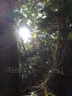 自然の写真・画像素材[260963]