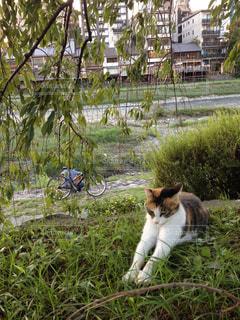 猫の写真・画像素材[289700]