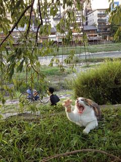 猫の写真・画像素材[289701]