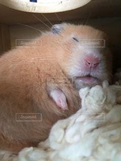 寝顔がブサイクですの写真・画像素材[293856]