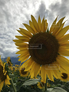 近くに黄色い花のアップの写真・画像素材[1389177]
