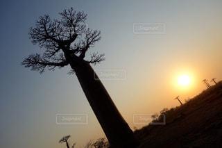 自然の写真・画像素材[258518]