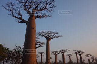 マダガスカルの写真・画像素材[258519]