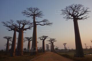 自然の写真・画像素材[258521]