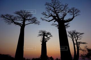 自然の写真・画像素材[258522]