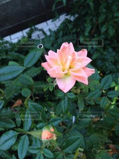 自然の写真・画像素材[257288]