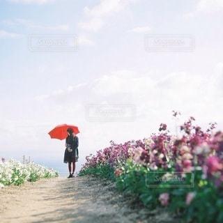 女性の写真・画像素材[3320]