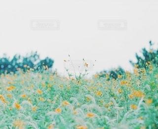 自然の写真・画像素材[3307]