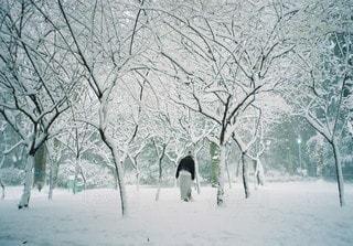 冬 - No.3290