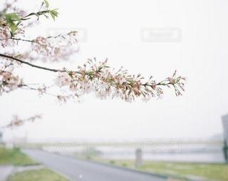 風景の写真・画像素材[3265]