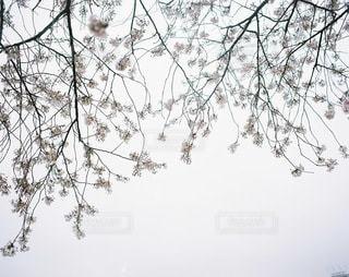 自然の写真・画像素材[3238]